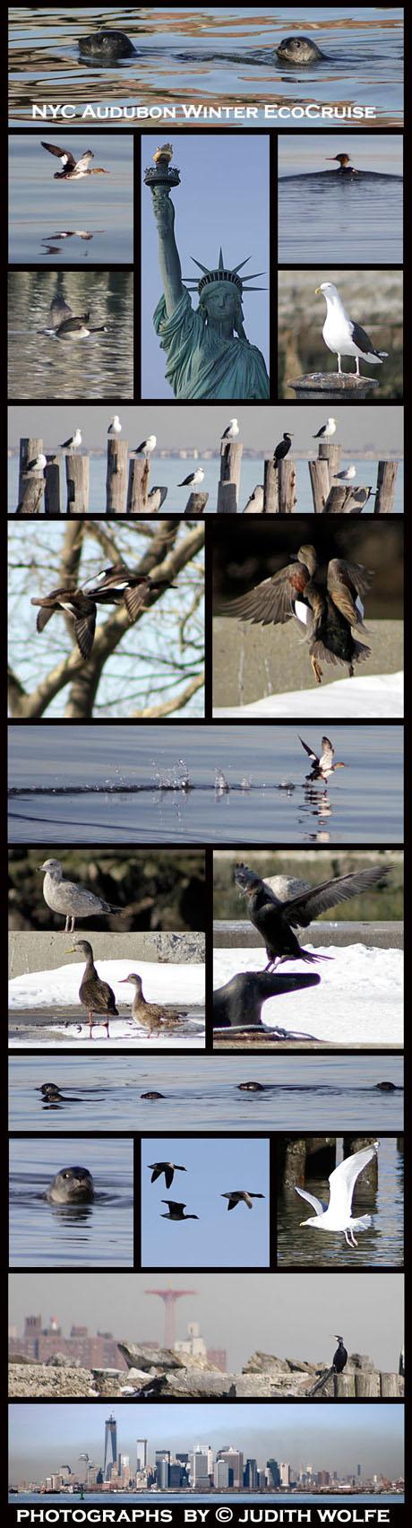 AudubonCruise