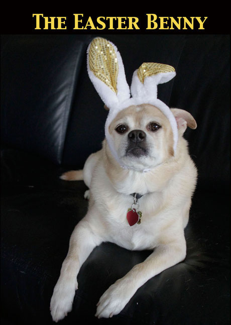 the easter benny