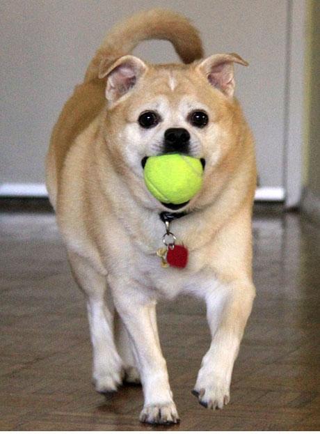Ball boy Benny-1