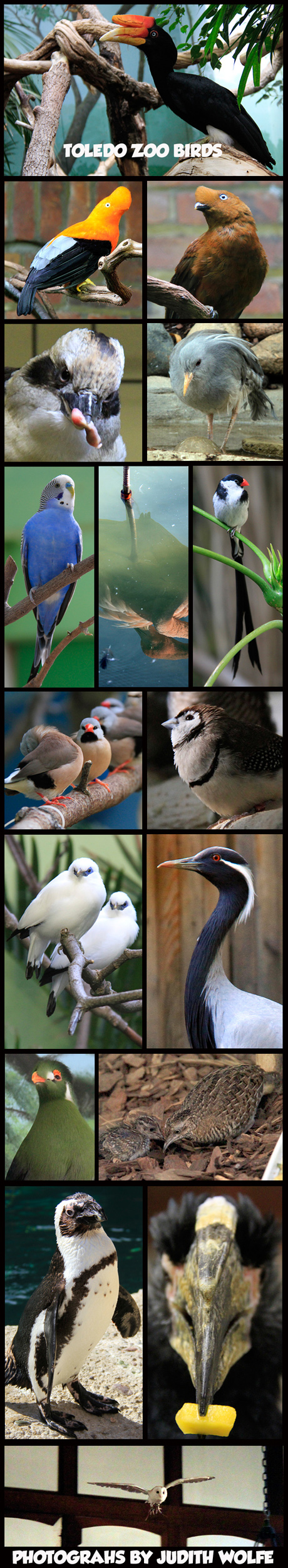TOLEDOZOOBIRDS