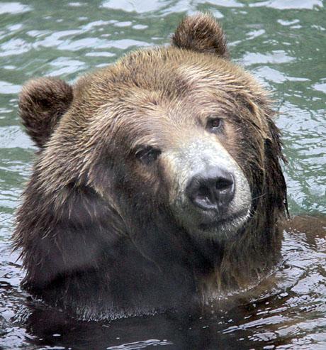 BETTY BEAR