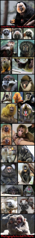 monkeyyear